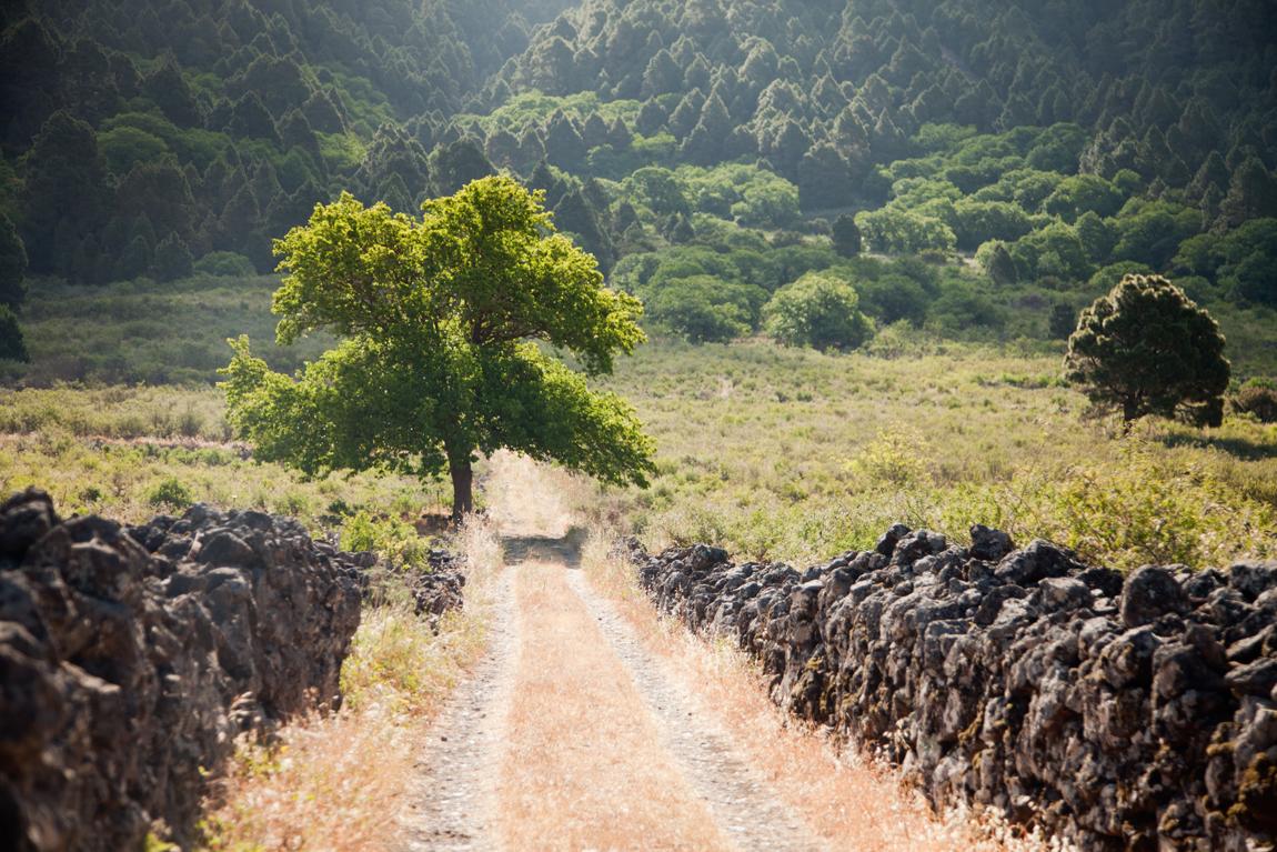 Camino Rural 02_El Paso_Virginia Shin